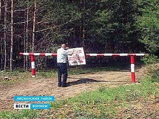 Доступ в хвойные леса Воронежской области закрыт абсолютно для всех