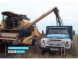Дожди мешают уборке подсолнечника на юге Воронежской области