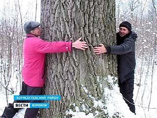 Два пчеловода из Борисоглебска стали изобретателями в растениеводстве