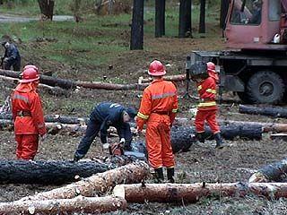 """""""Единороссы"""" помогают восстанавливать пострадавший после пожара лес"""