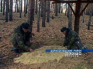 Егеря подкармливают лесных обитателей ради безопасности