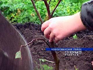Экологи, школьники и прихожане Отрадного трудились на свежем воздухе