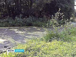 Экологи выясняют причины загрязнения реки Тавровка в районе посёлка Масловка