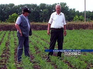Фермер из Калачеевского района выращивает экологически чистые овощи