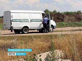 Фермер удобрил землю карантинным сорняком. Заражённое поле нашли в Борисоглебском районе