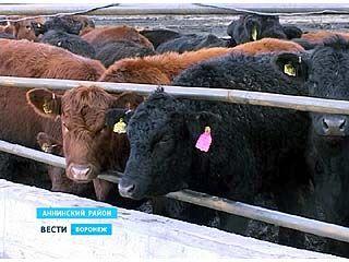 Ферму из Аннинского района проверяют сотрудники прокуратуры
