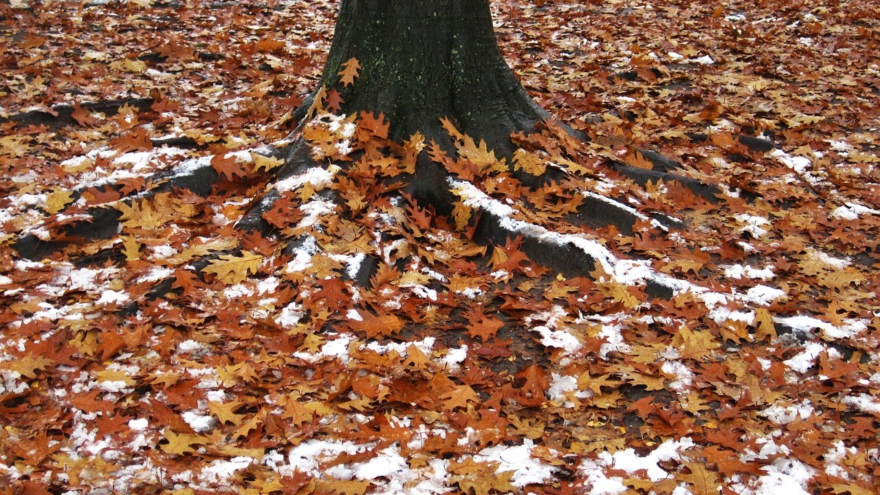 Жители Воронежской области сообщили о первом снеге