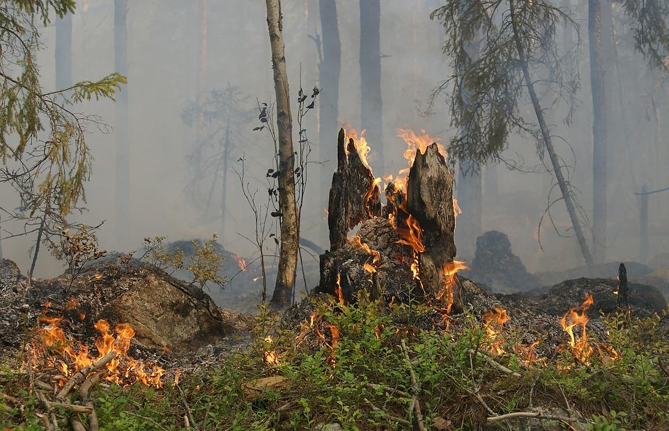 Спасатели предупредили о чрезвычайной пожарной опасности в Воронежской области