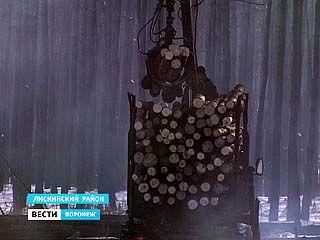 Горелый лес в Воронежской области убирают до сих пор