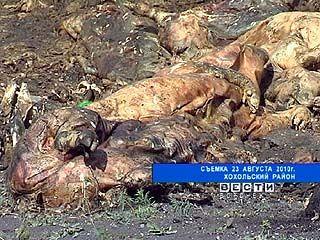 Гремяченскому заводу по утилизации биоотходов грозит крупный штраф