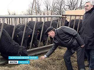 Губернатор Алексей Гордеев с рабочим визитом посетил Петропавловский район