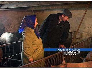 Хозяйства Таловского района проверяет районная ветеринарная служба