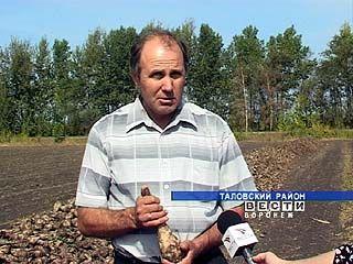 Хозяйства Воронежской области начинают подсчитывать убытки