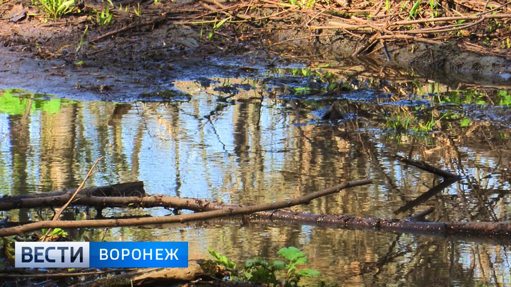 Ботанический сад затопило нечистотами – почему коммунальщики бездействуют