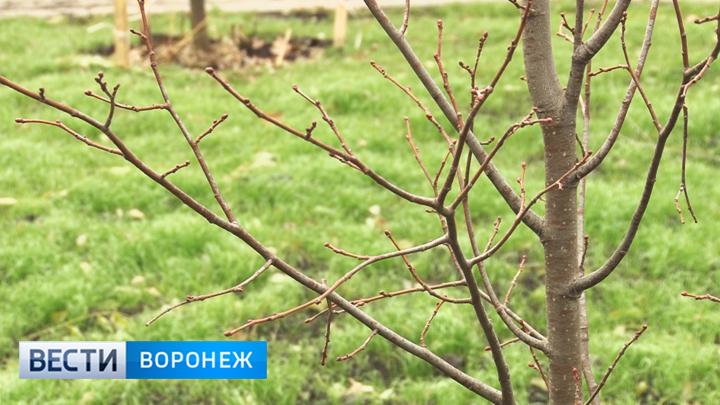 В Воронеже на месте устаревшего сквера появился новый