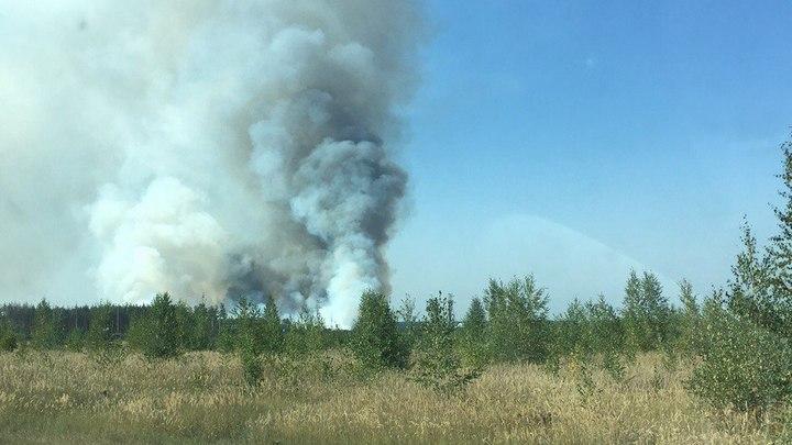 В воронежском микрорайоне Отрожка вновь загорелась лесная подстилка