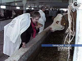 Итоги работы мясомолочной отрасли обсудят в Россоши