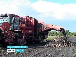 Из-за дождей воронежские аграрии не могут начать уборку свеклы - комбайны тонут в грязи
