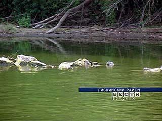 Из-за сильной жары упал уровень воды в реке Дон