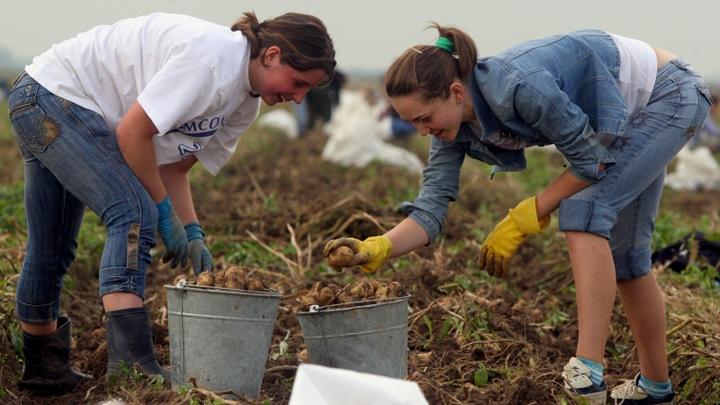 Немецкие студенты пройдут практику на мега-фермах Воронежской области