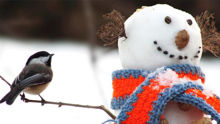 Жителей Воронежской области на рабочей неделе ждёт морозная погода
