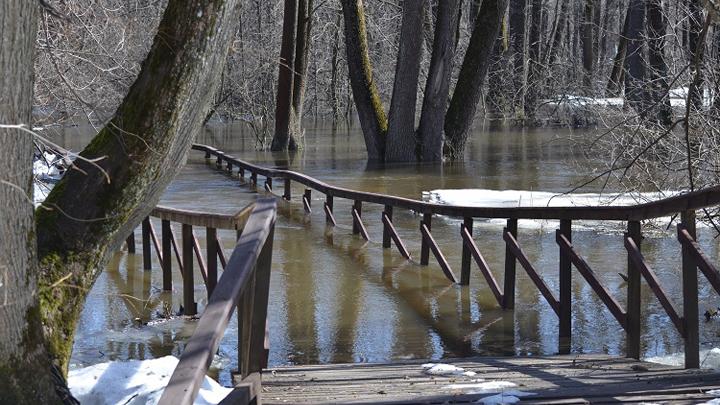 В Воронежском заповеднике из-за паводка закрыли две экотропы