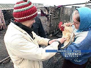К вакцинации птицы приступили в Павловском районе