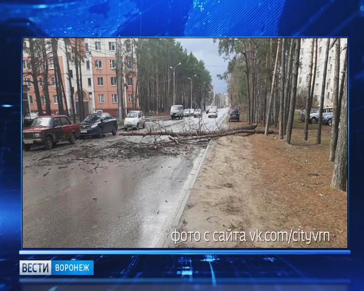 За один день воронежские спасатели получили 35 сообщений об упавших деревьях
