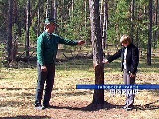 Кабаны наносят непоправимый вред лесам Воронежской области