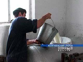 Калачеевский сыр в город Калач поставляют из Воронежа