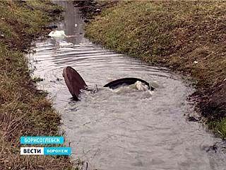 Канализацию в Борисоглебске снова прорвало - стоки уже у домов