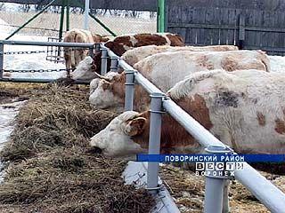 Кардаильский мукомольный завод вновь обзаводится подсобным хозяйством