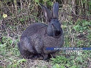 Кроличьи городки появились в Ломовском природном парке