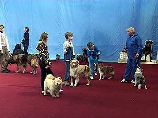 Крупнейшая выставка собак прошла в столице Черноземья