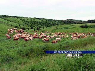 Крупный агрохолдинг приступил к развитию животноводства в Панинском районе