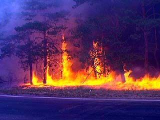 Крупный лесной пожар произошел на окраине Воронежа