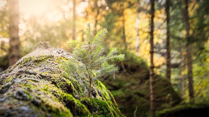 В Воронежской области 32 памятника природы взяли под особую охрану