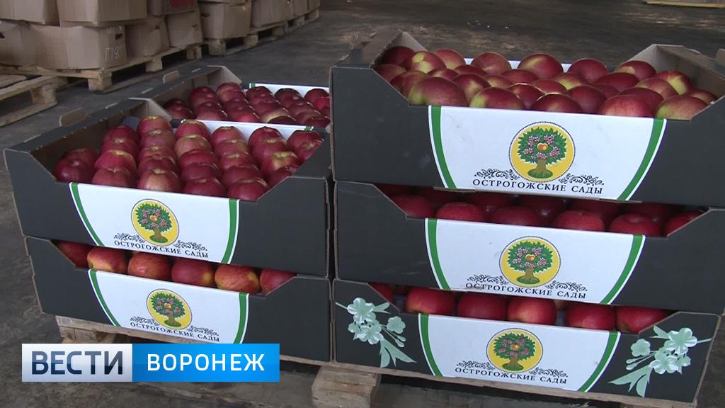 Можно ли найти воронежские яблоки на прилавках местных супермаркетов?