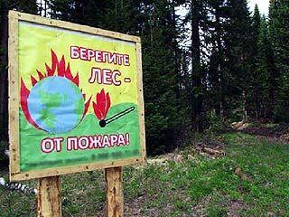 Леса Воронежской области в зоне повышенного риска пожарной опасности