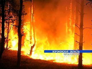 Лесной пожар в Бобровском районе мог уничтожить целое село