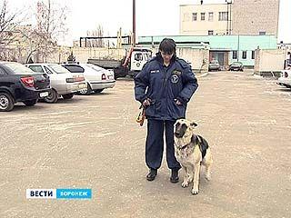 Лучший кинолог центральной России живёт в Воронеже