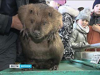 Международный день бобра отметили в Воронежском биосферном заповеднике