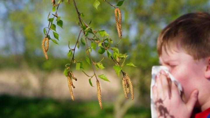 В Воронеже появилась карта пыльцы для аллергиков
