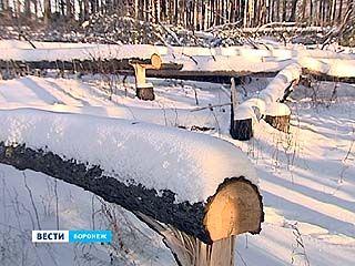 На Антонова-Овсеенко спилили ещё 500 деревьев