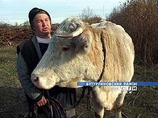На коров и лошадей в Воронежской области придется ставить сигнализации