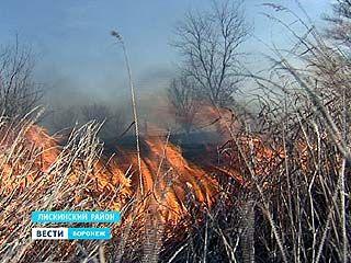На окраине Лисок горела стерня