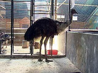 На птичьем дворе Воронежского зоосада появился новый житель