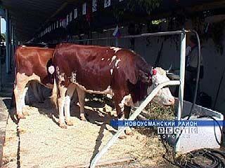 На развитие животноводства в области направлено три миллиарда рублей