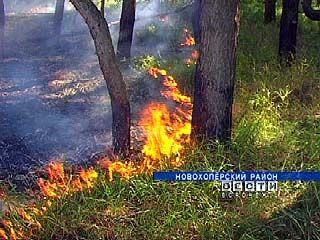 На территории Краснянского поселения вспыхнул лесной пожар