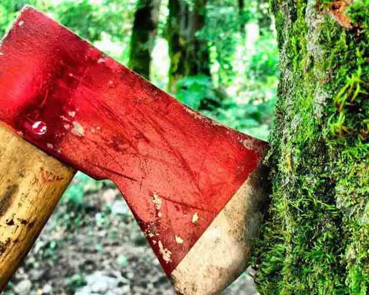 На территории «Воронежской нагорной дубравы» вырубили многолетние деревья